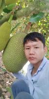 菠萝蜜成长过程中