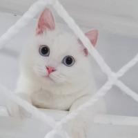 #我家萌宠成精了#猫咪看见快速移动的物体会本能地去抓,可他怕伤害到我,一再克服自己的本能…