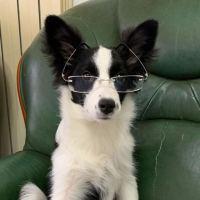 #我家萌宠成精了#如何与狗子无障碍交流…