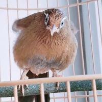 画眉鸟起性了