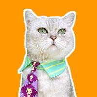 #劳动最光荣#这才是真正的猫咖吧!准备好小鱼干点餐吧